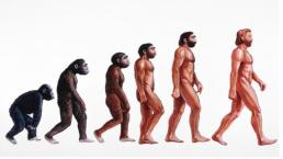 "^BHuman evolution. ^b Illustration showing stages in the evolution of humans. At left, ^Iproconsul^i (23-15 million years ago) is depicted hypothetically as an African ape with both primitive and advanced features. From it ^IAustralopithecus^i ^Iafarensis^i (>4- 2.5 Myr BP) evolved and displayed a bipedal, upright gait walking on two legs. ^IHomo^i ^Ihabilis^i (2.5 Myr BP) was truly human (""homo"") resembling ^IAustralopithecus^i but also used stone tools. About 1.5 Myr BP ^IHomo erectus^i (at centre) appeared in Africa, used fire, wooden tools, and migrated from Africa into Eurasia. ^IHomo^i ^Ineanderthalensis^i (200,000 years BP) lived in Europe and Middle East and was closely related to modern humans (right)."